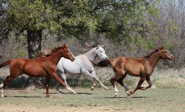 2 year old colts -